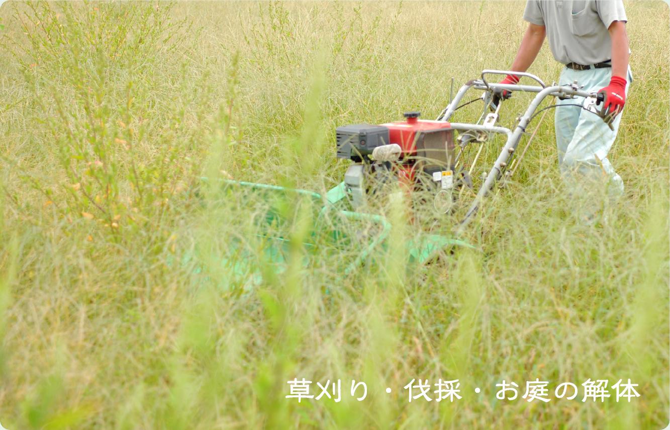 草刈り・伐採・お庭の解体イメージ画像