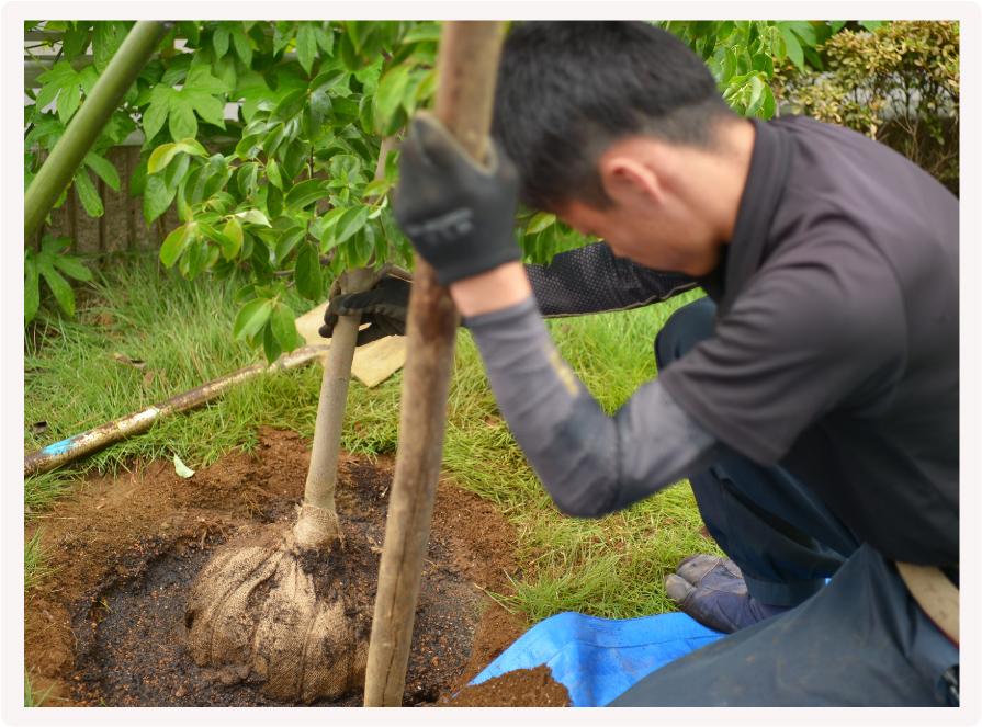 植栽工事・お庭づくりイメージ